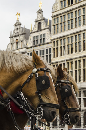 belgian horse: Antwerp city view Stock Photo