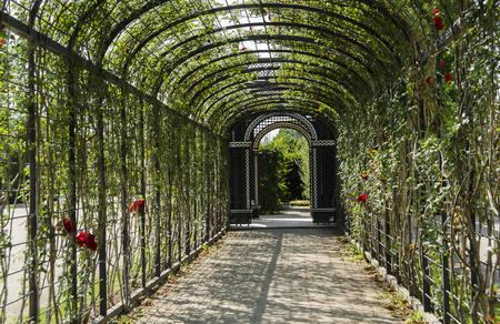 rose garden: Rose garden