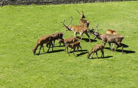 northern spain: Deer park in northern Spain Stock Photo