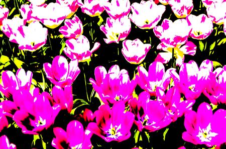 Colorful floral pattern illustration