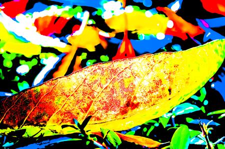 autumn background: Vibrant autumn background colorful illustration Stock Photo