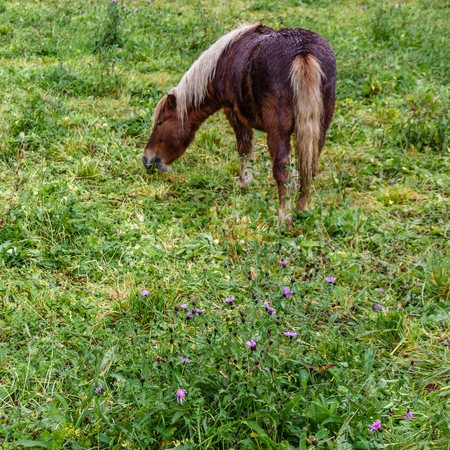 Horse in a countryside farm in Asturias, northern Spain Stock Photo