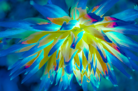 Colorful illustration of a Dahlia flower, vibrant background