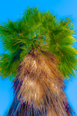 Colorful illustration of a hairy palm tree