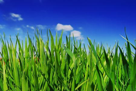 Fresh Grass Stock Photo - 2796780