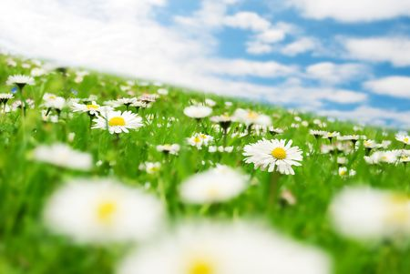 meadowland: Daisies under the sky Stock Photo
