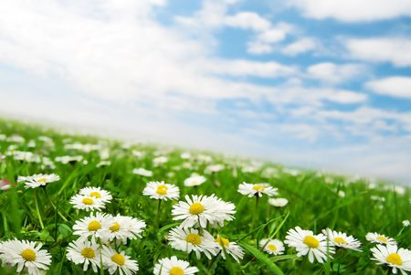 Daisies under the sky b Stock Photo