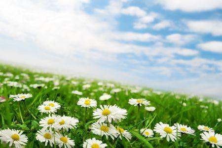 Daisies under the sky b Stock Photo