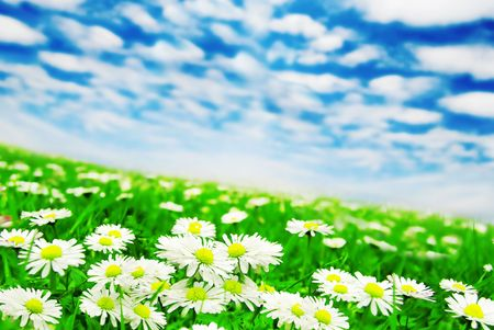 Daisies under the clouds Stock Photo