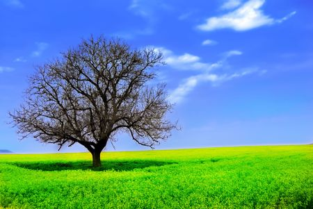 Lonely Tree in a Yellow Field Stock Photo - 2930916