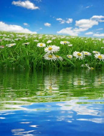 Field with daisies reflecting Stock Photo - 3087600