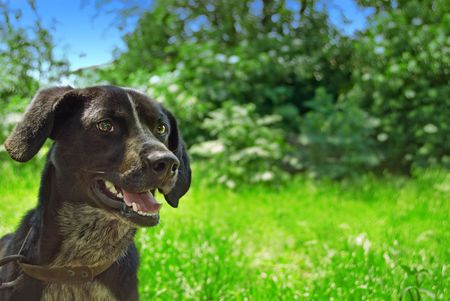 Dog with green background