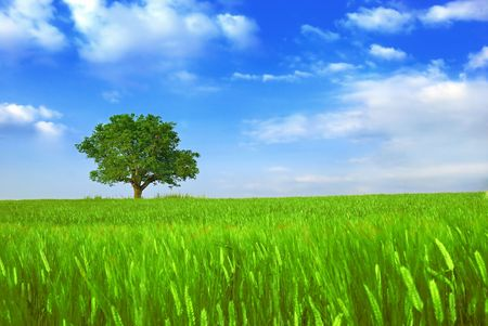 Green fields, the blue sky and tree