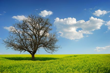 Lonely Tree in a Yellow Field, morning Stock Photo - 4793394