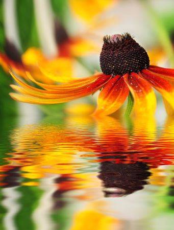 Orange flower reflected in the water photo