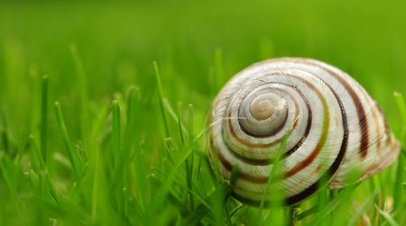 A snail shell on the grass, macro