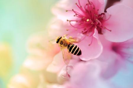 miel de abeja: Blooms coloridos y abeja de miel