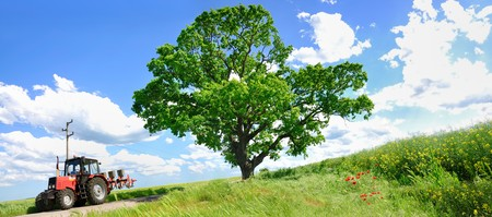agronomics: Farming tractor and big green tree in a field