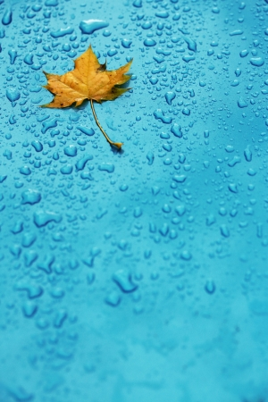 Yellow leaf and drops on the blue waterproof material  photo