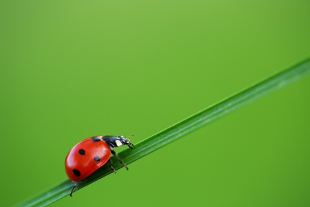 leaf close up: Ladybug on green grass and blue background Stock Photo