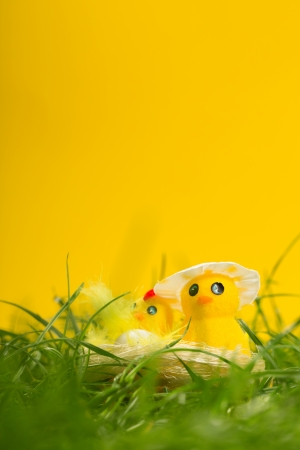 Easter chicks in the grass on yellow bakcground photo