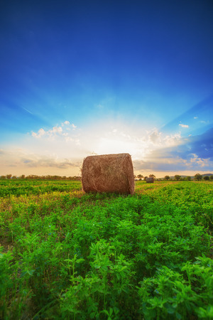 Sunset field, tree and hay bale  photo
