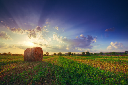 hay field: Sunset field, tree and hay bale Stock Photo