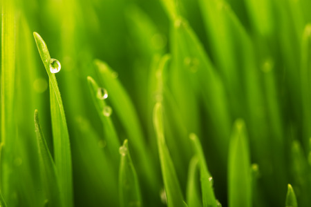 Green wet grass with dew on a blades. Shallow DOF Stock Photo