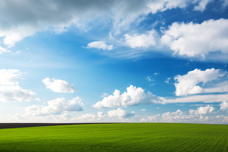 sky and clouds: Meadow with green grass and blue sky with clouds