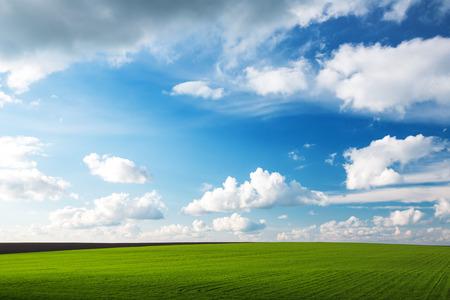 dia soleado: Prado con hierba verde y cielo azul con nubes
