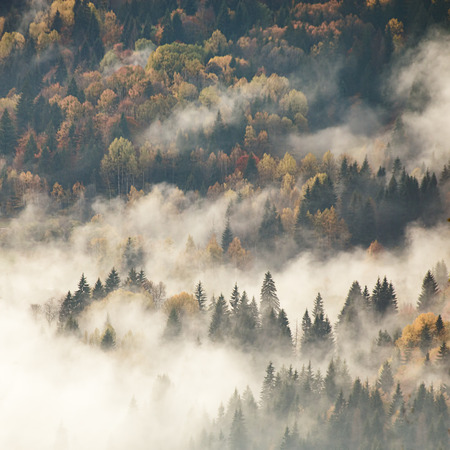 View of misty fog mountains in autumn photo