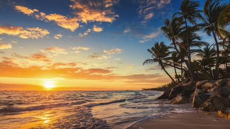 sunset tree: Landscape of paradise tropical island beach, sunrise shot