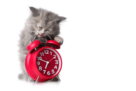 cute pussy: Cute kitten with red alarm-clock isolated on a white background