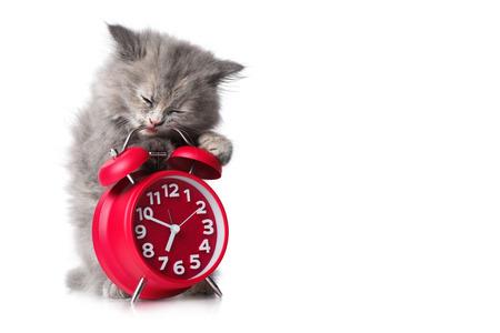 Leuk katje met rode wekker die op een witte achtergrond