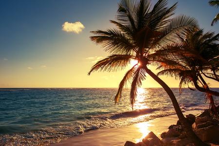熱帯のビーチでは、日の出ショットのヤシの木 写真素材