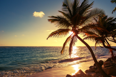 tropical sunset: Palm tree on the tropical beach, sunrise shot