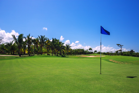 golf green: Golf course. Beautiful landscape of a golf court with palm trees in Punta Cana, Dominican Republic