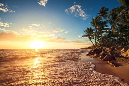熱帯のビーチでは、日の出ショットでヤシの木