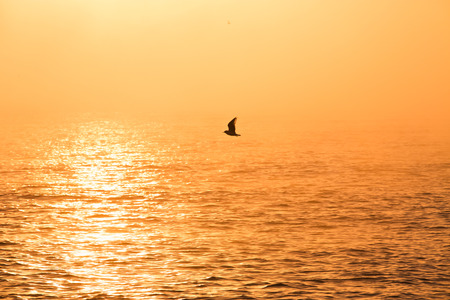 Sunrise over sea and flying bird