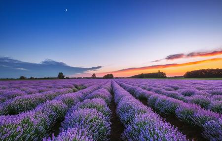 Sunrise and dramatic clouds over Lavender Field Foto de archivo