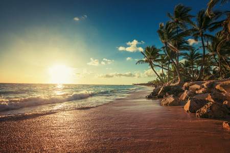 caribbean: Landscape of paradise tropical island beach, sunrise shot