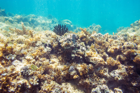 waterline: Underwater coral reef, seabed view with horizon and water surface split by waterline Stock Photo