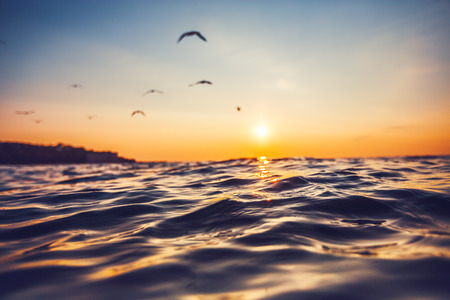 olas de mar: La luz del amanecer brillando sobre las olas del océano