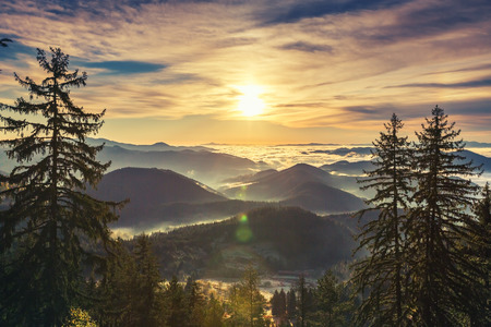 sunrise mountain: Sunrise over misty pine forest on the mountain slope in a nature reserve.