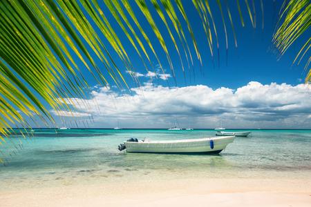 dominican: Exotic Beach in Dominican Republic, Punta Cana Stock Photo