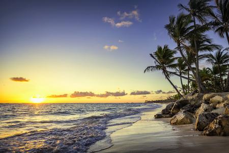 Palm trees on the tropical beach, Bavaro, Punta Cana, Dominican Republic