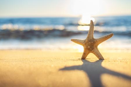 étoile de mer: Starfish sur la plage au lever du soleil Banque d'images