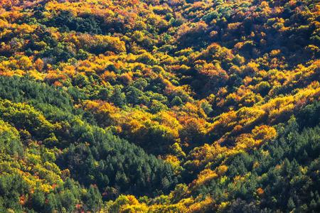 textura: fondo colorido bosque, oto�o vista Foto de archivo