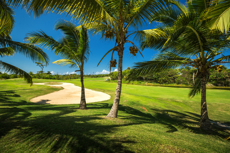 dominican: Golf course. Beautiful landscape of a golf court with palm trees in Punta Cana, Dominican Republic