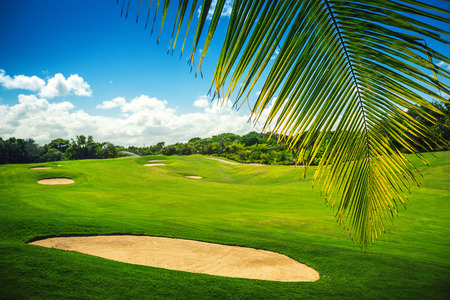 courses: Golf course. Beautiful landscape of a golf court with palm trees in Punta Cana, Dominican Republic
